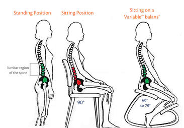 Your spine on the Variable balans
