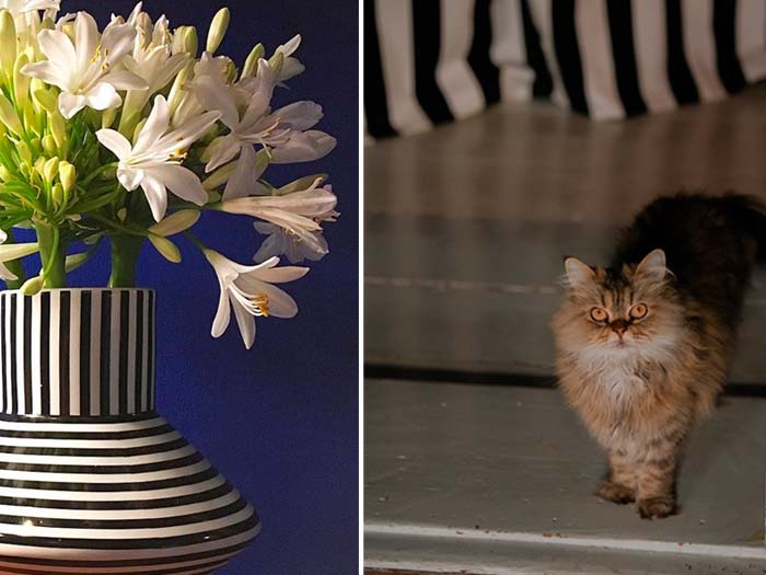 cat in doorway and vase with flowers